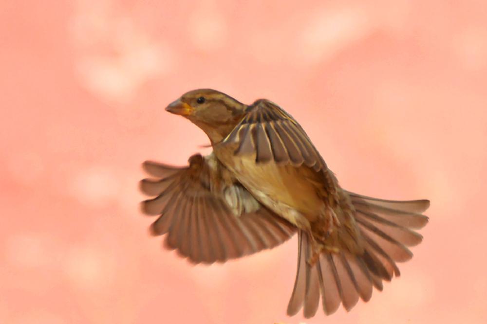Photo in Animal #moineau #nature #oiseau