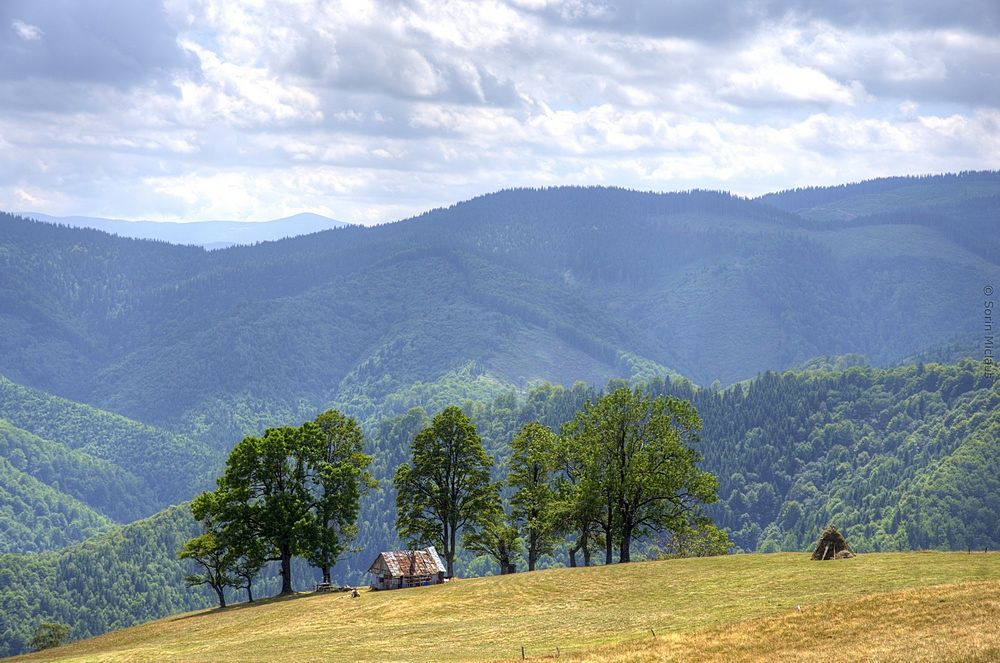 Photo in Landscape #mountain #hills #trees #cottage #haystack #forest #hike #summer # transylvania