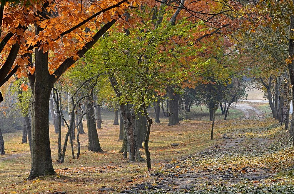 Photo in Landscape #park #walk #autumn #leaves #colorful #alley #trees