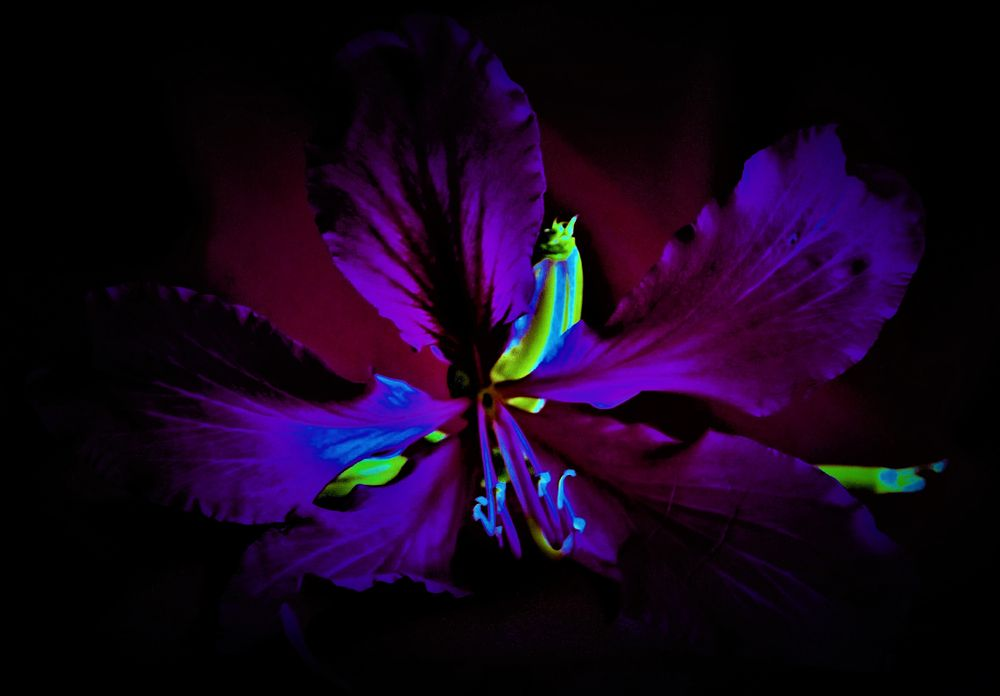 Photo in Random #flower #cerise #purple #orchid #yellow