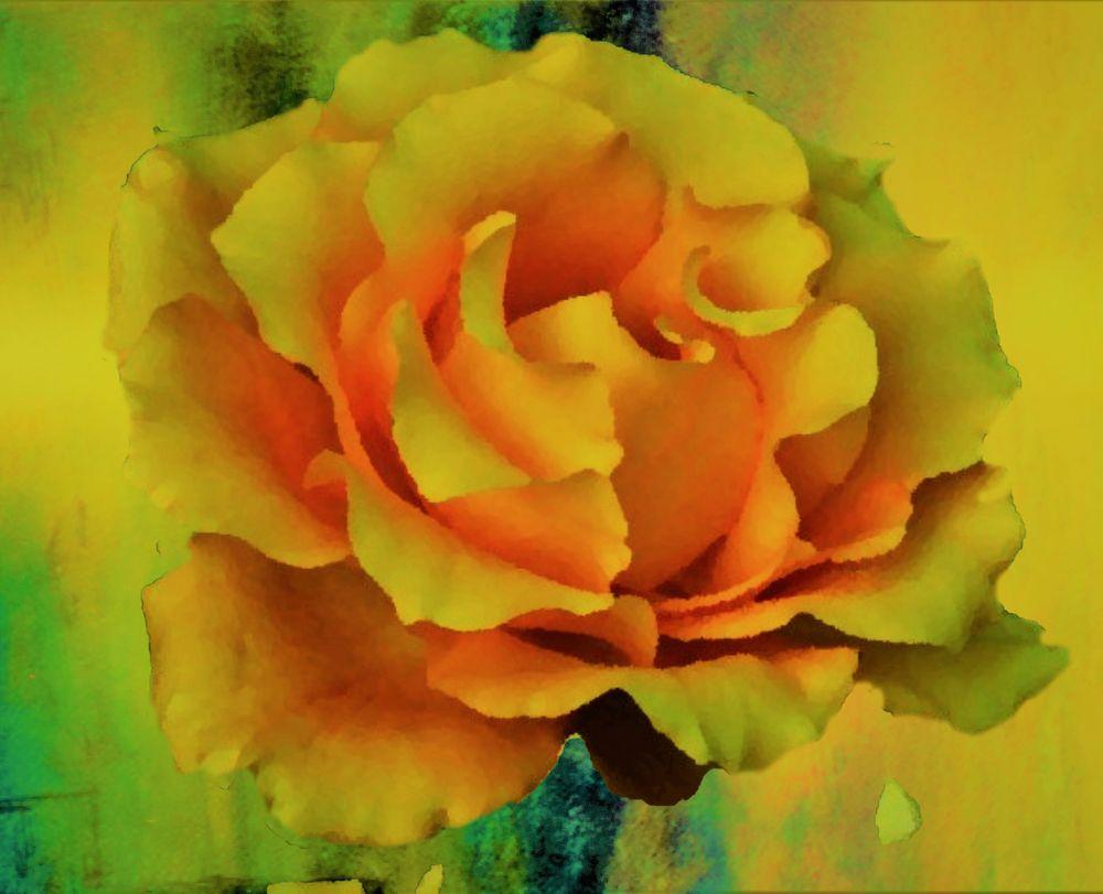 Photo in Random #green #painted #backdrop #rose #orange #yellow