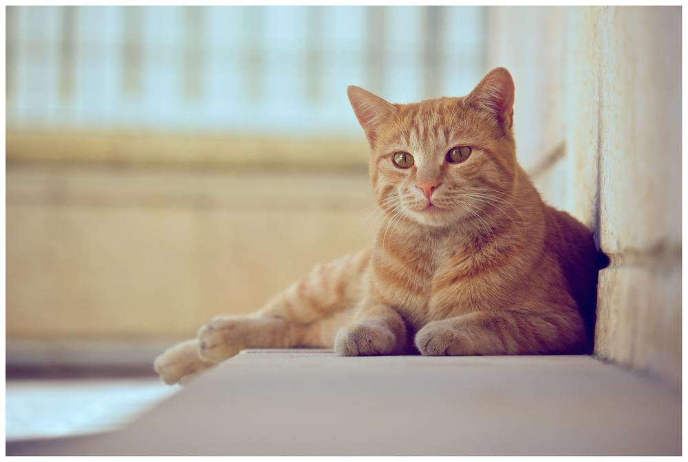 Photo in Animal #redhead kitty #redhead #kitty #israel #jerusalem #david plotnikov