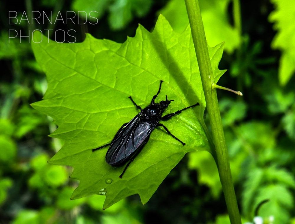 Photo in Nature #green #black #insect #like #canon #share #nature