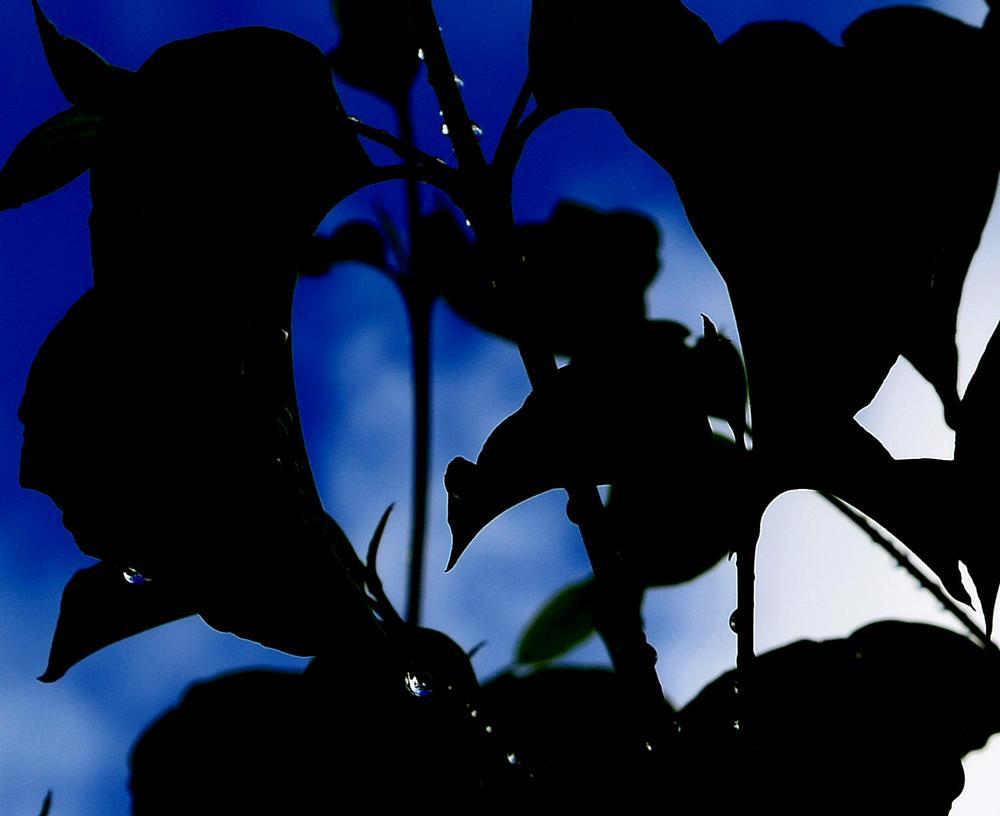 Photo in Nature #silhouette #blue skies #raindrops #nature