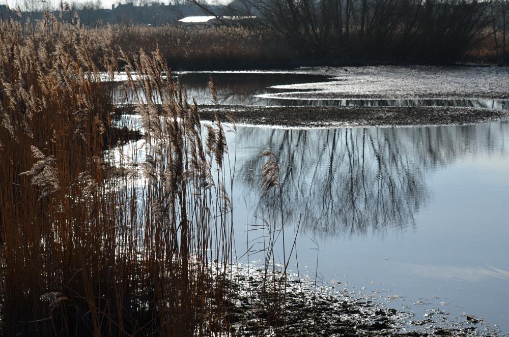 Photo in Landscape #nature #wetlands #reserve #landscape