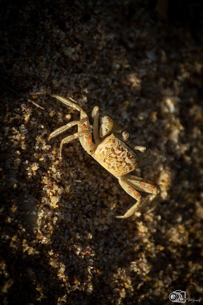 Photo in Portrait #portrait #crab #tangalle #srilanka