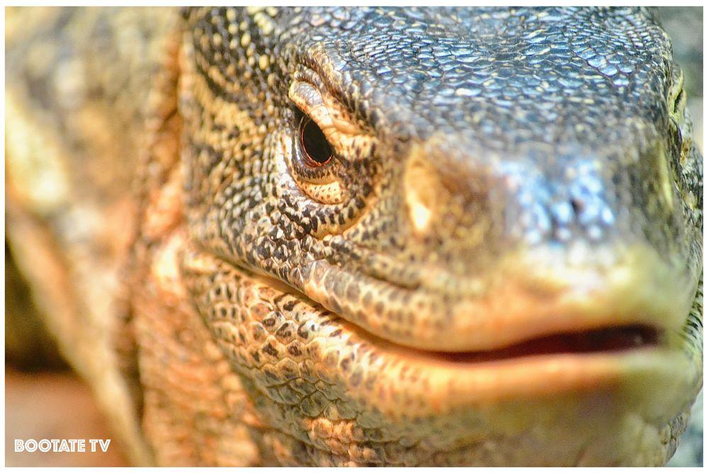 Photo in Animal #bronx zoo #bootate #bootatefilms #bootate tv