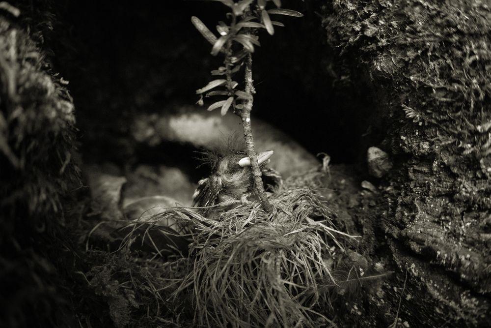 Photo in Black and White #blackandwhite #bnw #bird #animal #nature #wildlife