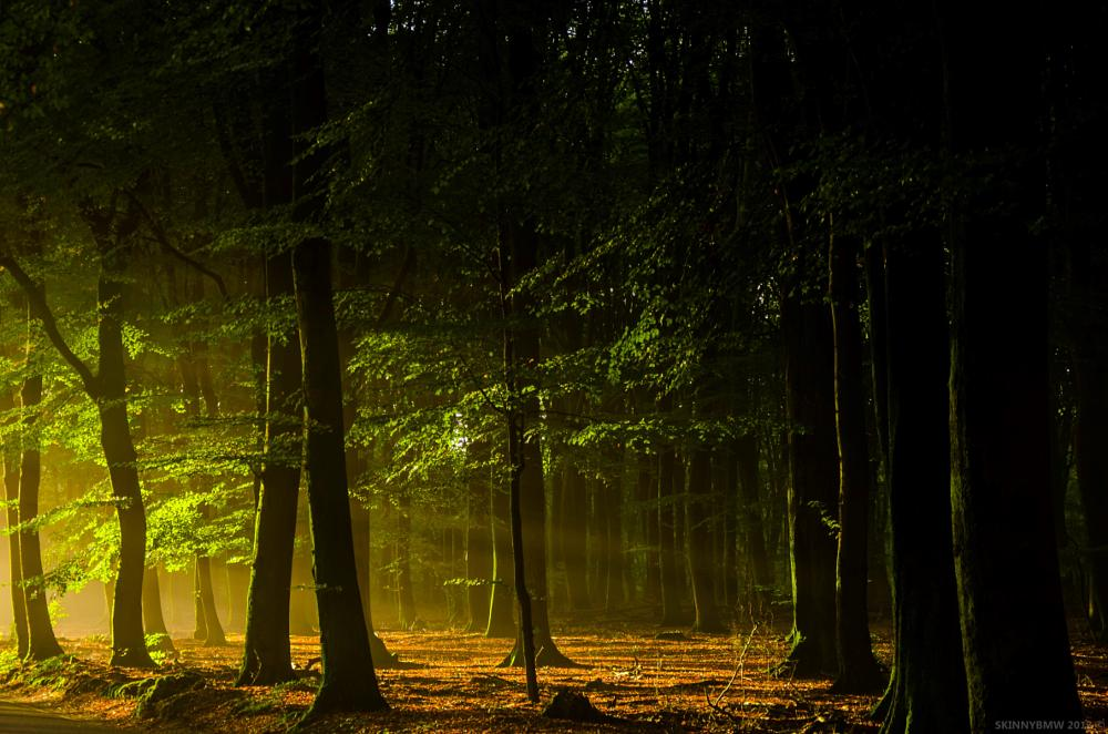 Photo in Landscape #sun #morning #woods #forest #light