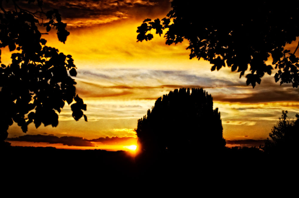 Photo in Fine Art #calbourne #d5100 #isle of wight #lightroom #nikon #perfect photo suite #silhouette #sunset #tree