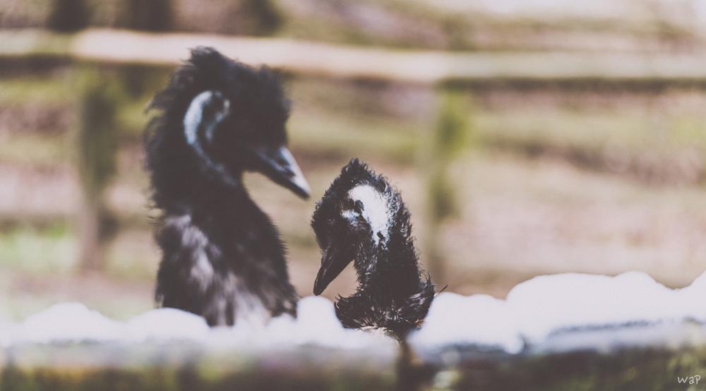 Photo in Animal #animal #wildlife #ostrich