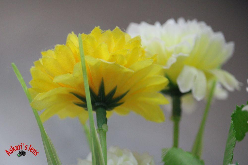 Photo in Random #flowers #white #yellow #landscape #love #nature
