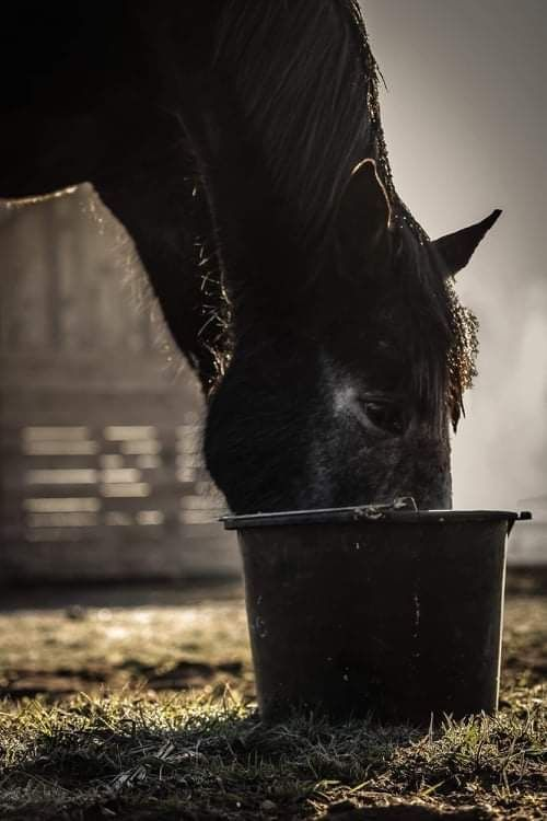 Photo in Animal #horse #animal #feed #morning #breakfast