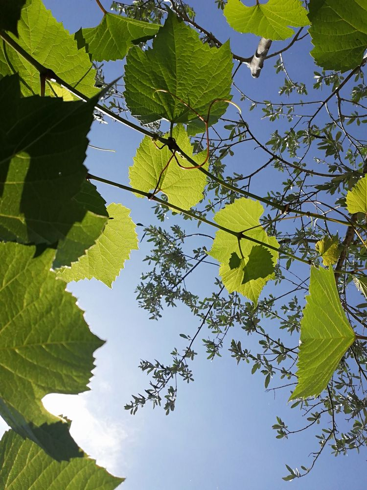 Photo in Nature #nature #sky #green #leaf