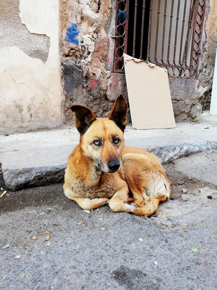 Photo in Animal #italy #animals #dogs #eyes #city #spirit