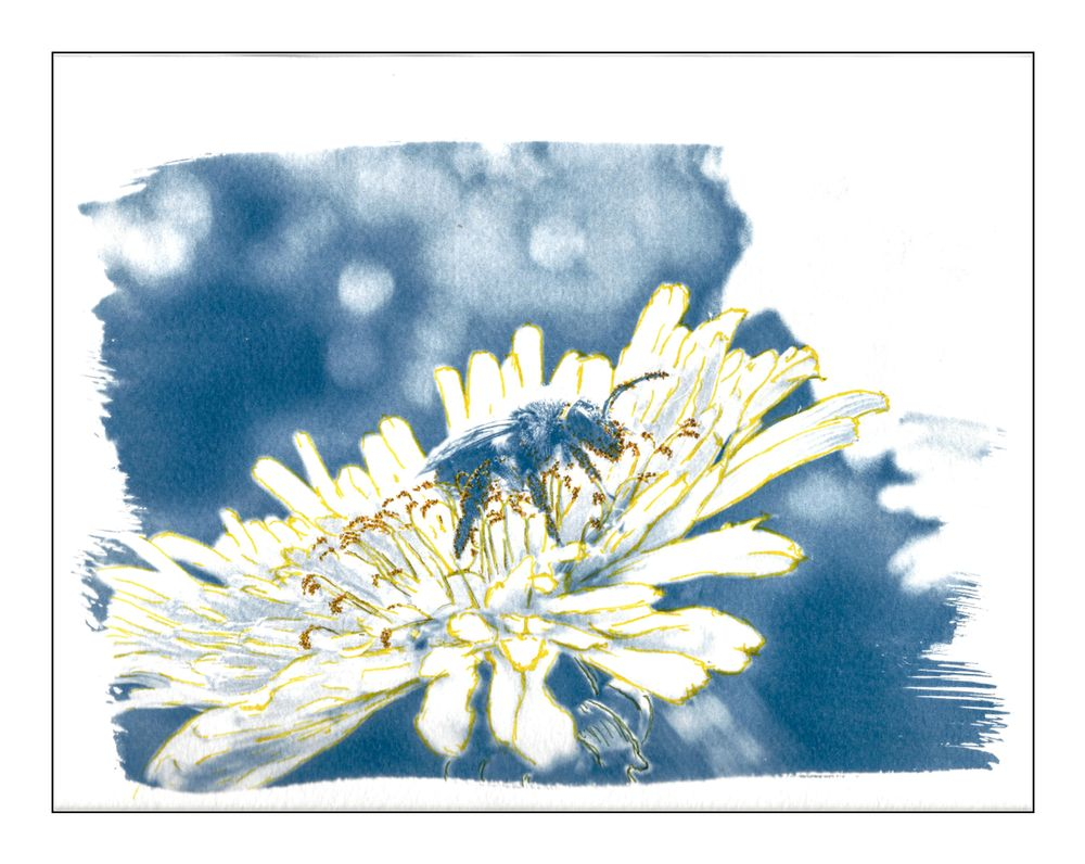 Photo in Random #cyanotype #insect #art #macro #bee #flower