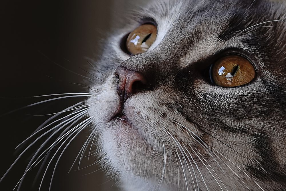 Photo in Random #cat love sweet eyes