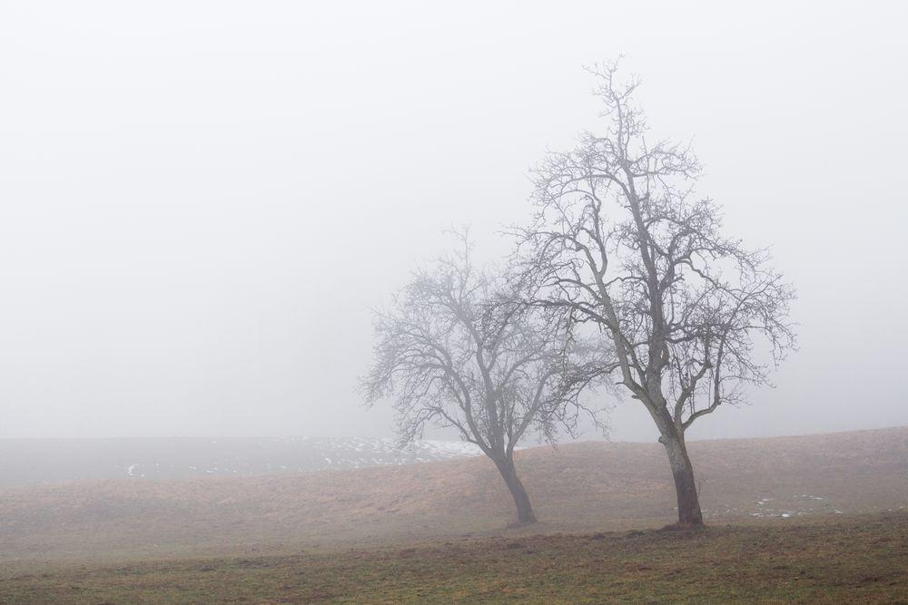 Photo in Landscape #fog #landscape #winter #tr #trees