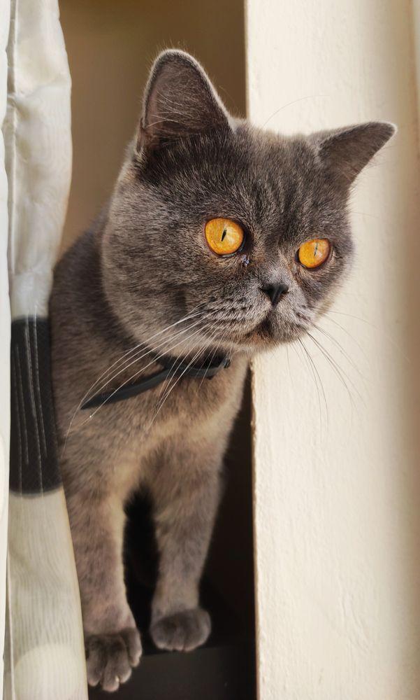Photo in Random #cat #pet