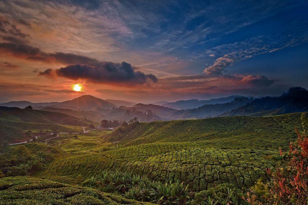 Photo in Landscape #cameron highlands #sunrise #boh tea plantation #ypa2013