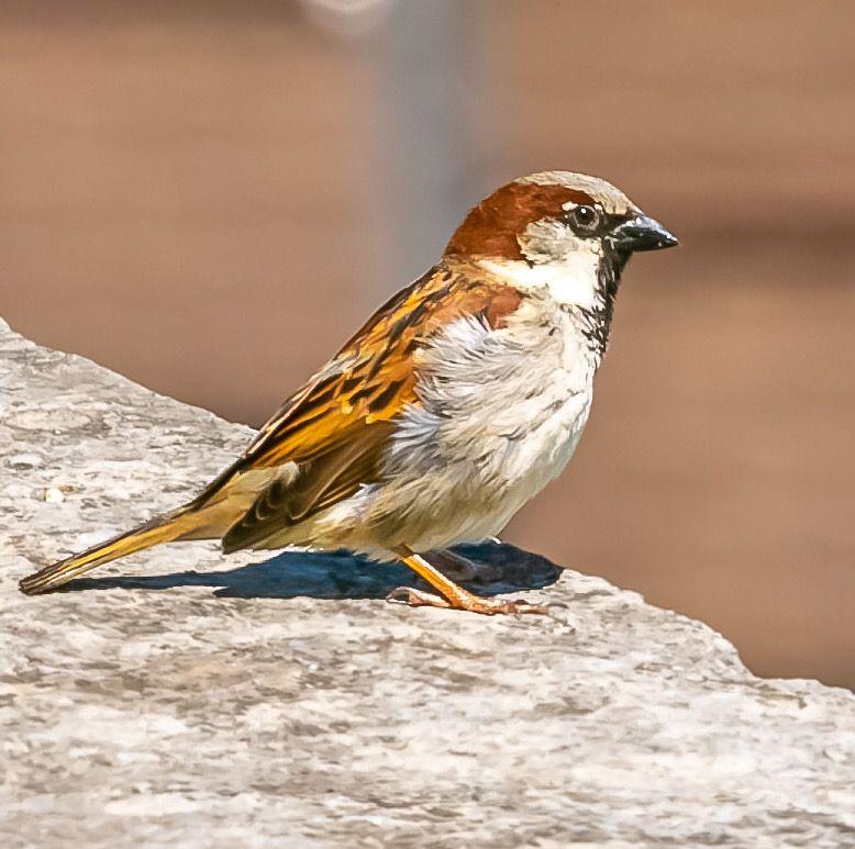 Photo in Animal #bird #oiseau #birds #oiseaux #wildlife #wildlifephotography #nature