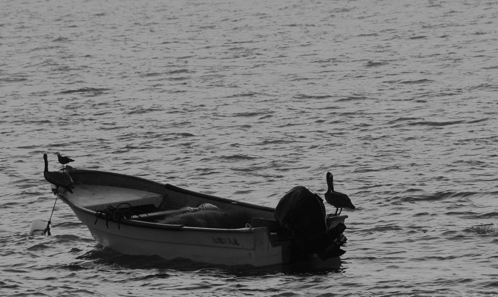 Photo in Nature #lancha #ocean #pelicano