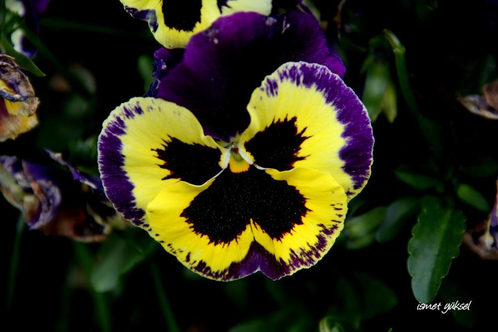 Photo in Macro #flower macro nature natural