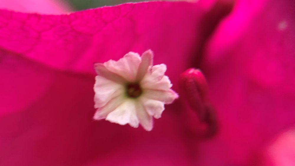 Photo in Macro #macro #nature #flower #travel