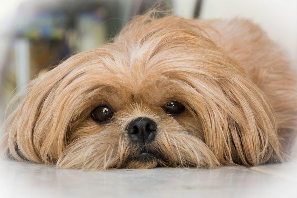 Photo in Animal #animal #close up #dog