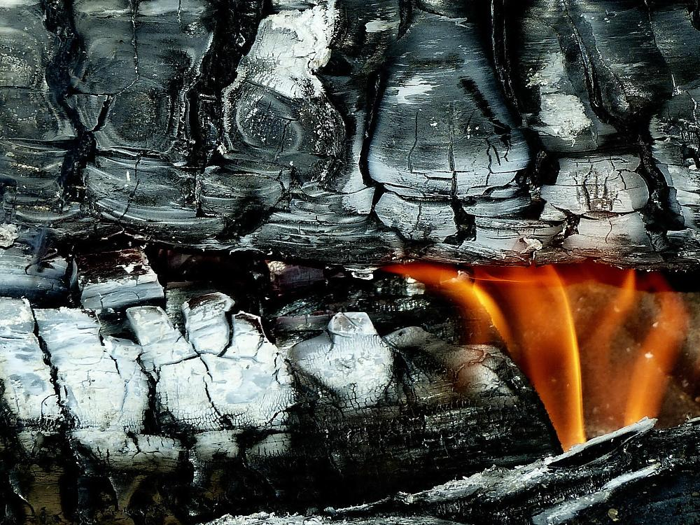 Photo in Macro #fire #wood log #cold #heat