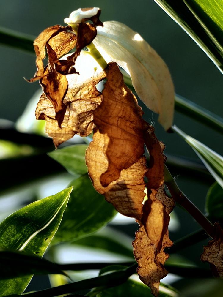 Photo in Macro #heliomen #colors #leaves