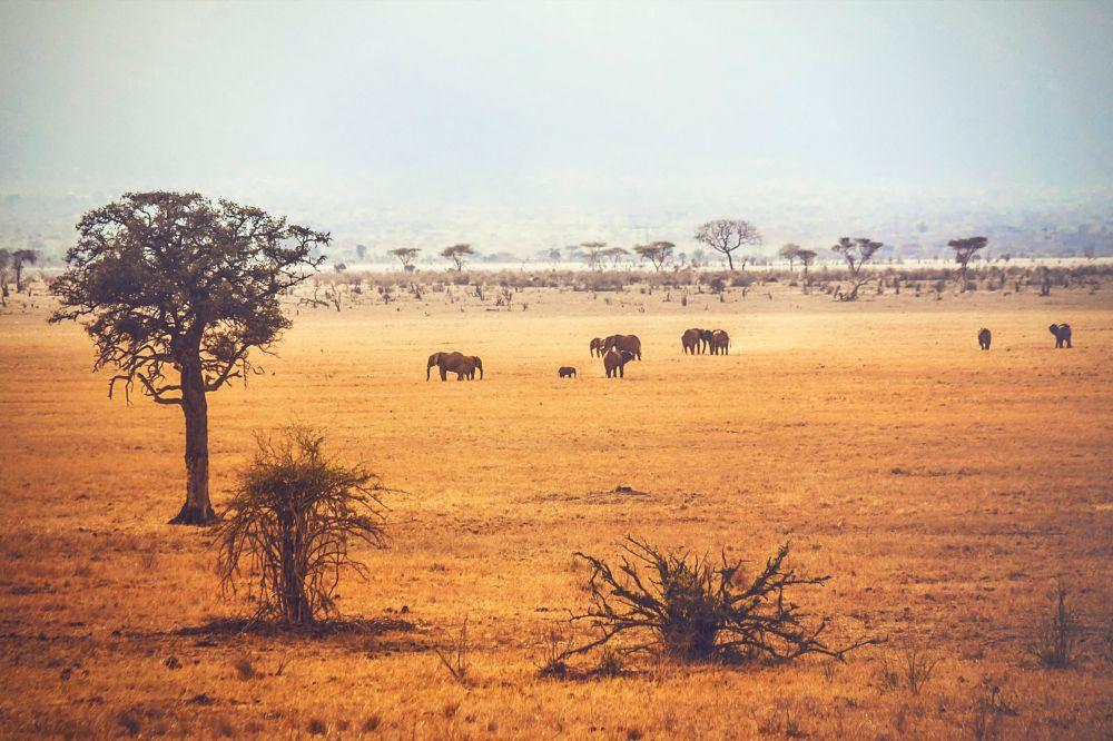 Photo in Landscape #elephant #animal #crusader #steppe #savanne #kenya #africa #tsavo #mombasa