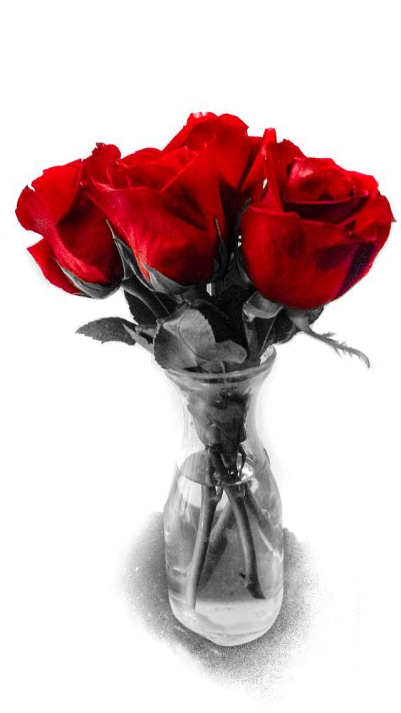 Photo in Black and White #roses #flowers #vase #black&white #red