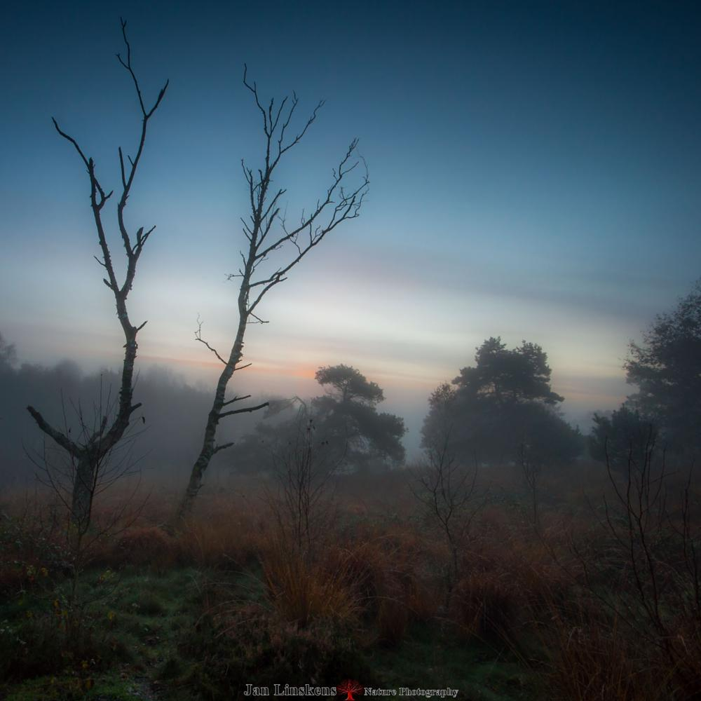 Photo in Nature #jan linskens #maasduinen #nature #landscape #sunrise #fog