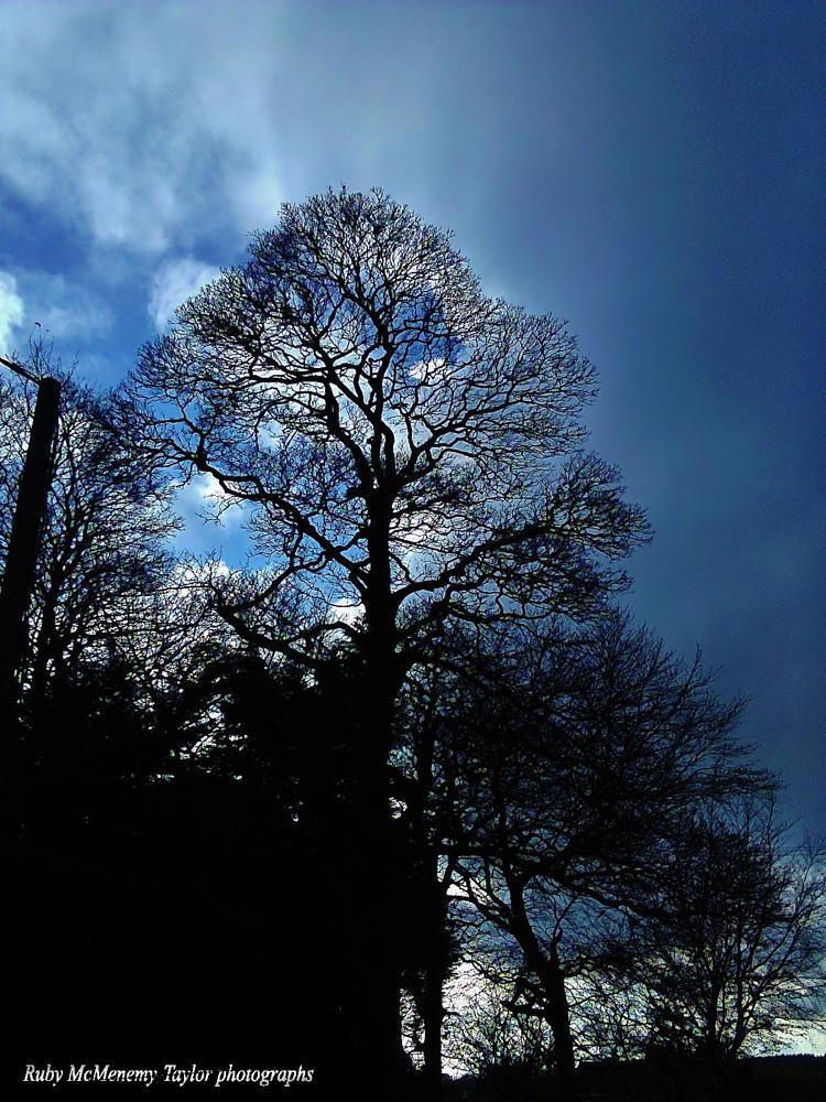 Photo in Nature #sky #trees #evening #garden