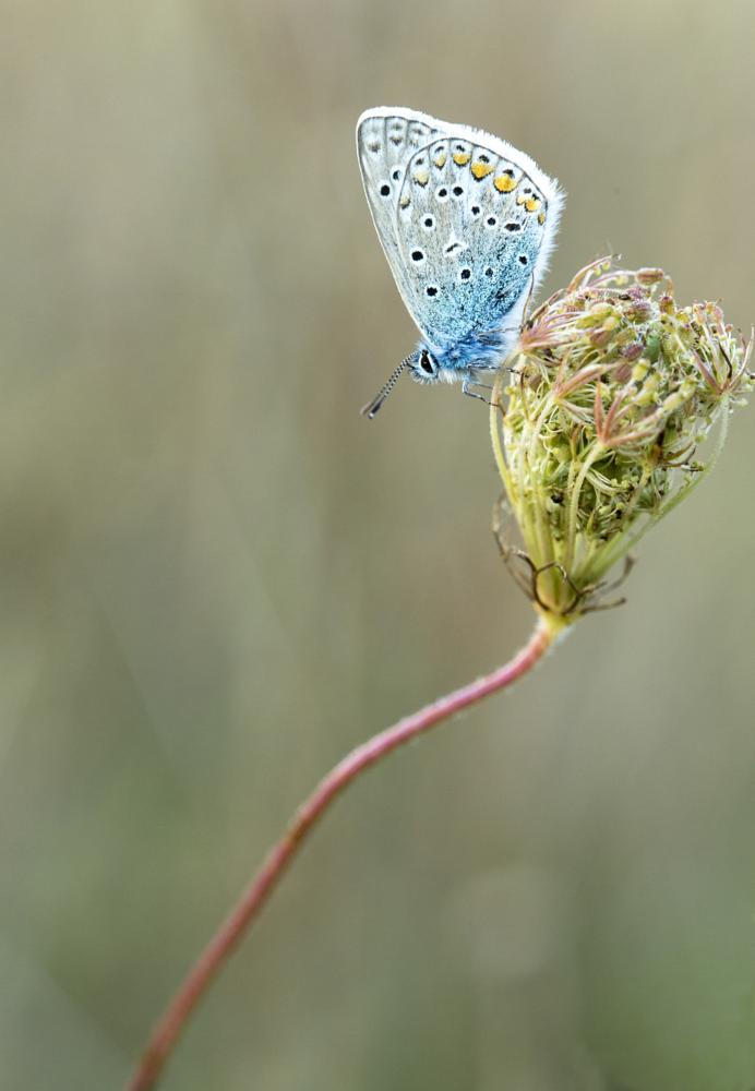 Photo in Macro #macro #insect #butterfly #nature #canon