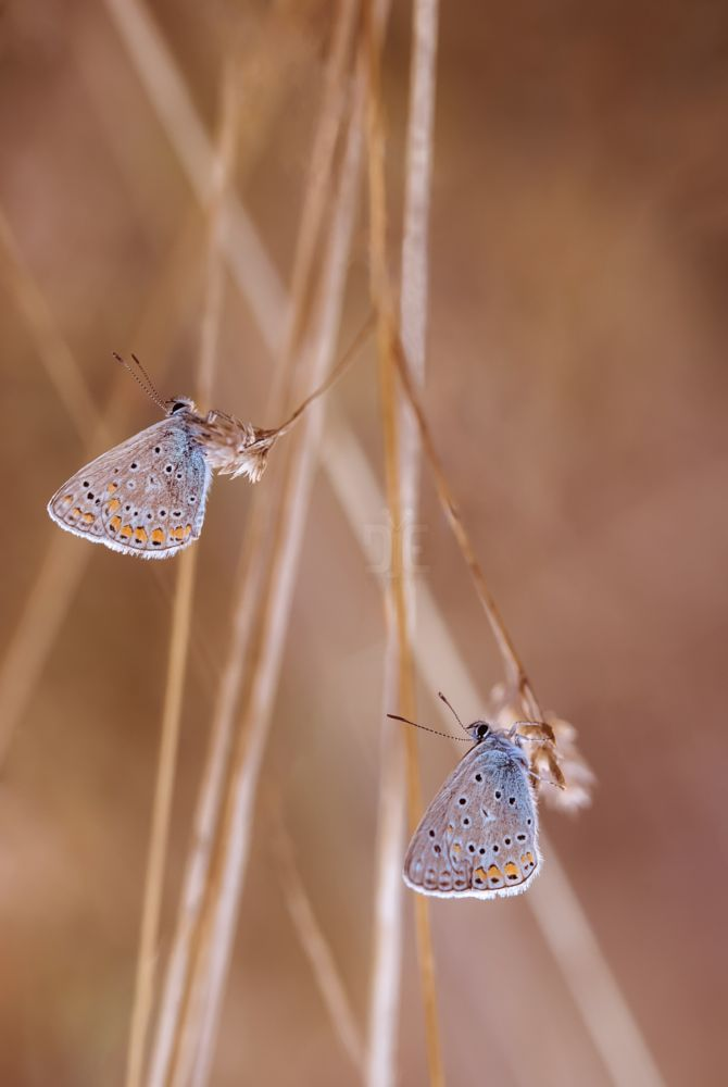 Photo in Macro #macro #nature #butterfly #dusk #sunset #evening #light #color #canon