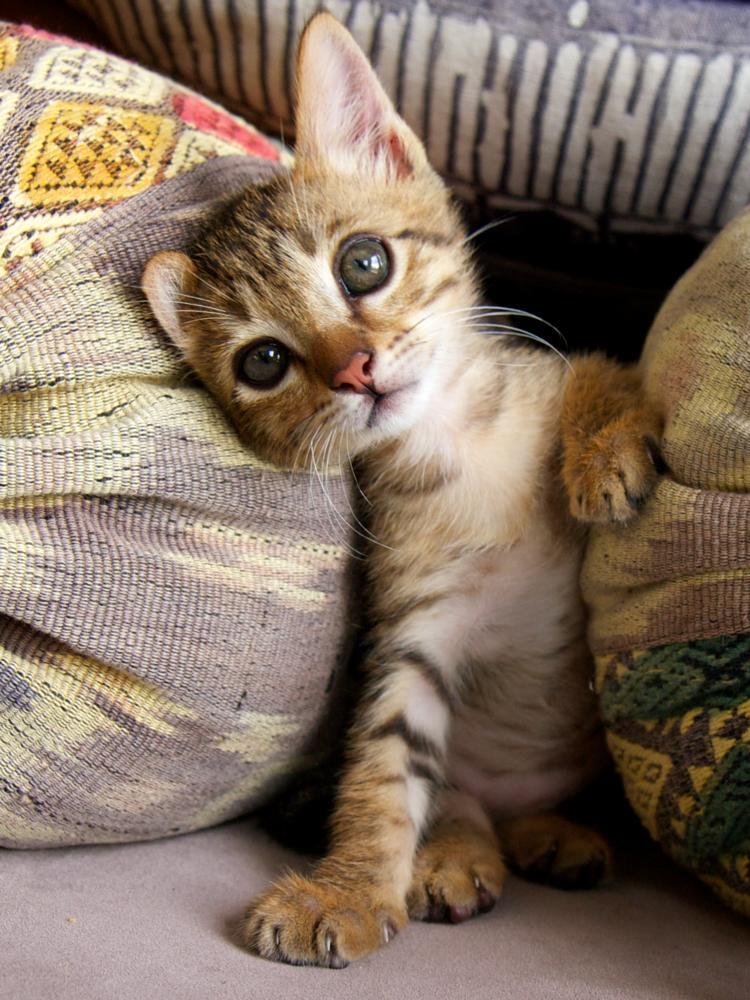 Photo in Animal #pet #cat #kitten