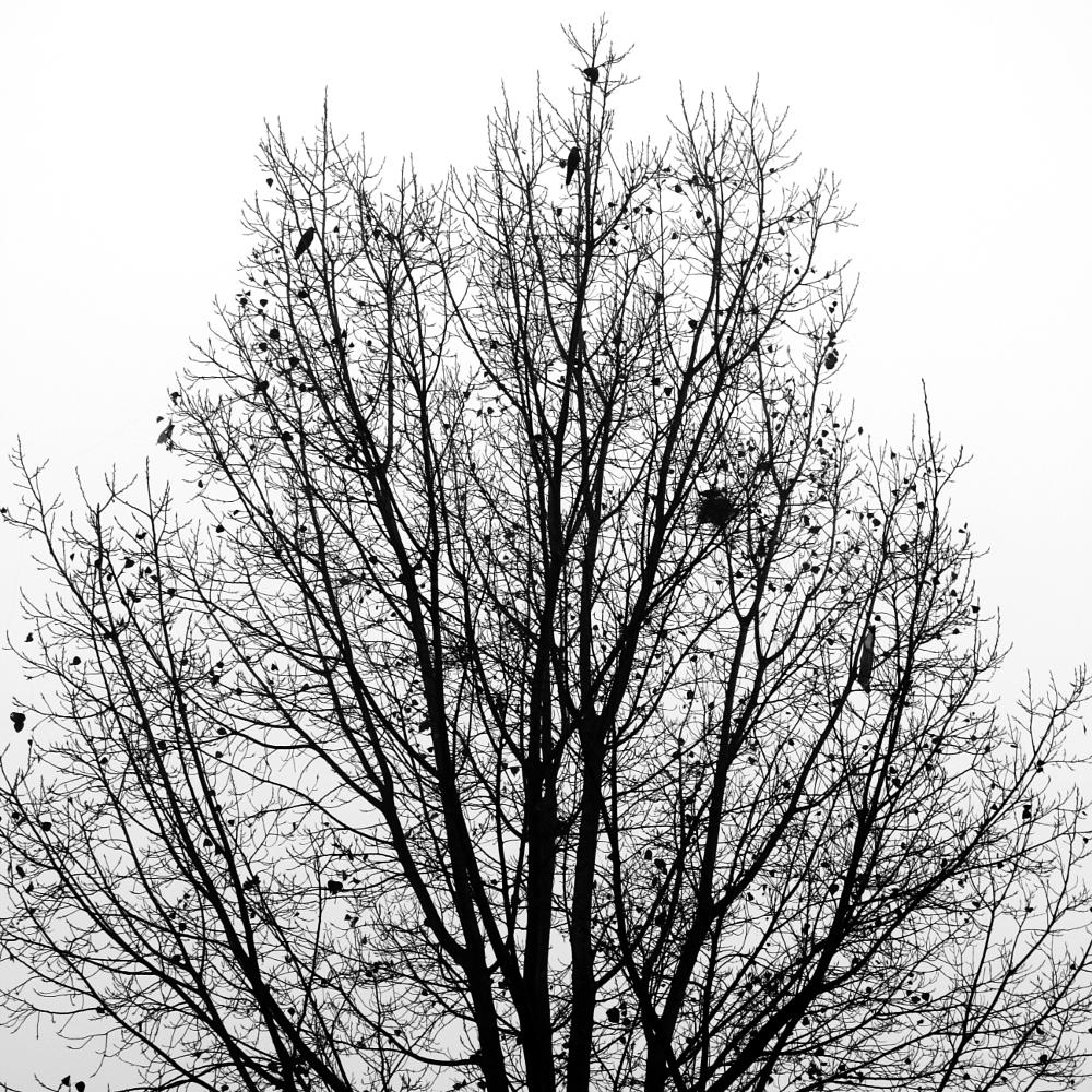 Photo in Black and White #tree #branch #leafless #winter #autumn #bw #black #whtie #rukh #life #cyle #bird #negative #positive