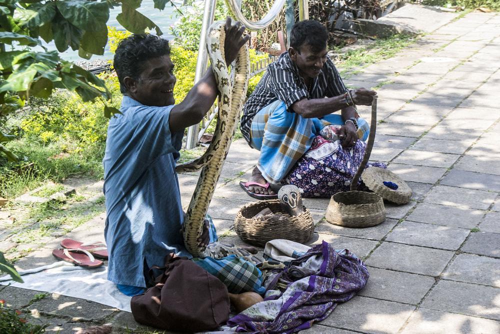 Photo in Street Photography #people #sri lanka #snake #animale