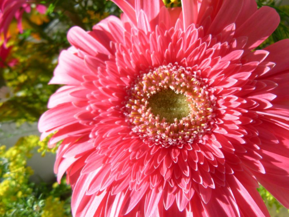 Photo in Nature #life #pink #sweet #flower #garden #green #happy