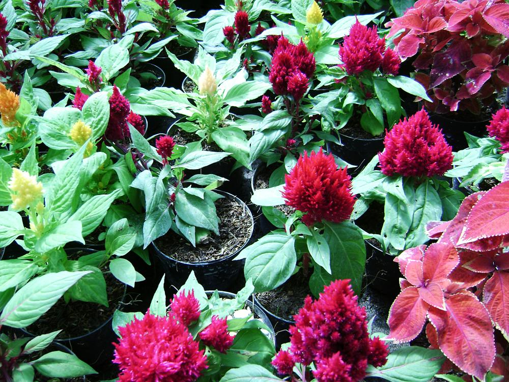 Photo in Nature #flowers #red #green #earth #grown