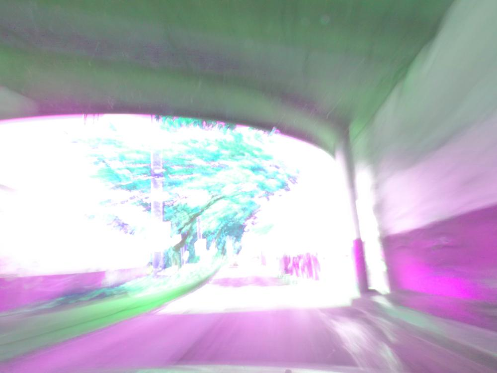 Photo in Nature #colour #green #street #inside #three