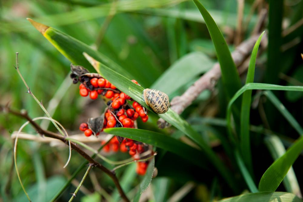 Photo in Nature #nature #flower #red #green #leaves #snail