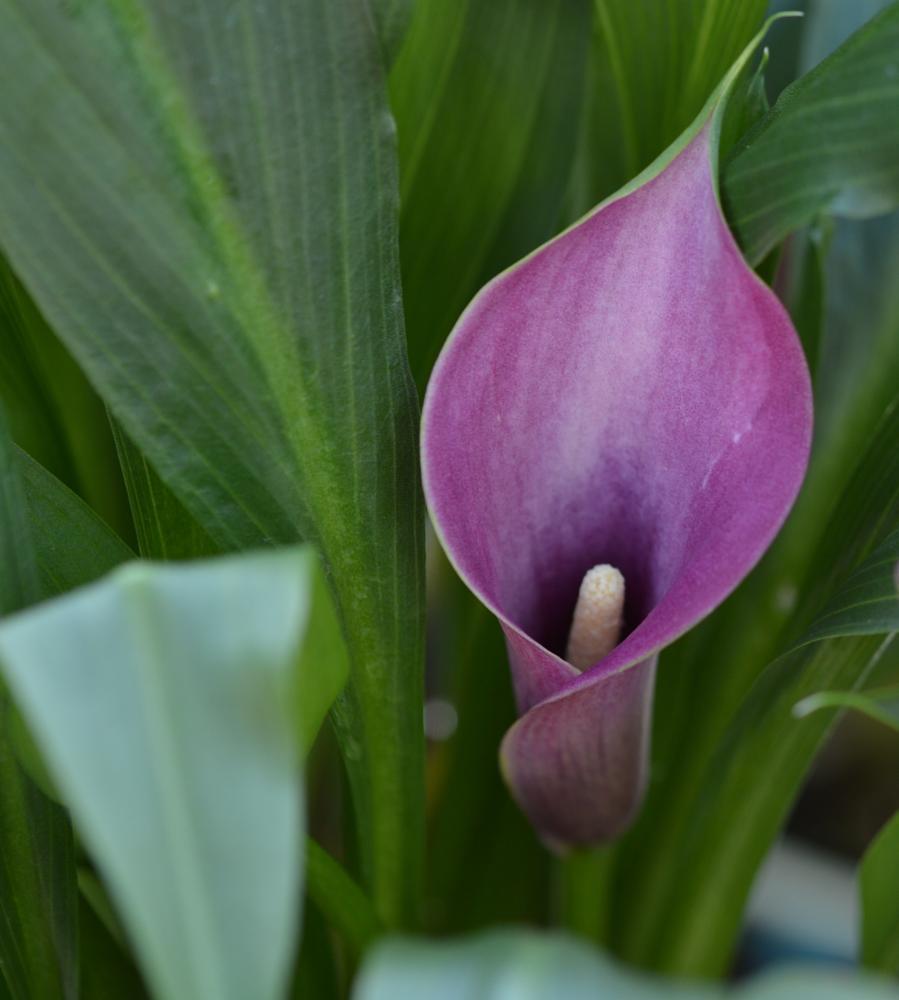 Photo in Fine Art #flower #nature #fine art
