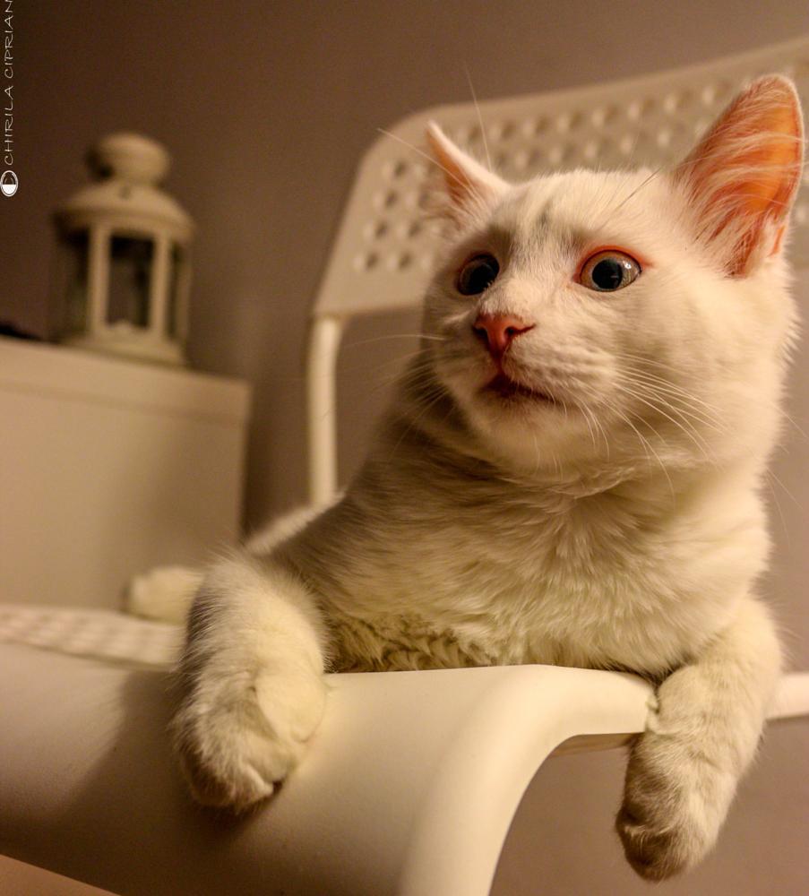 Photo in Animal #cat #curiositi #wtf