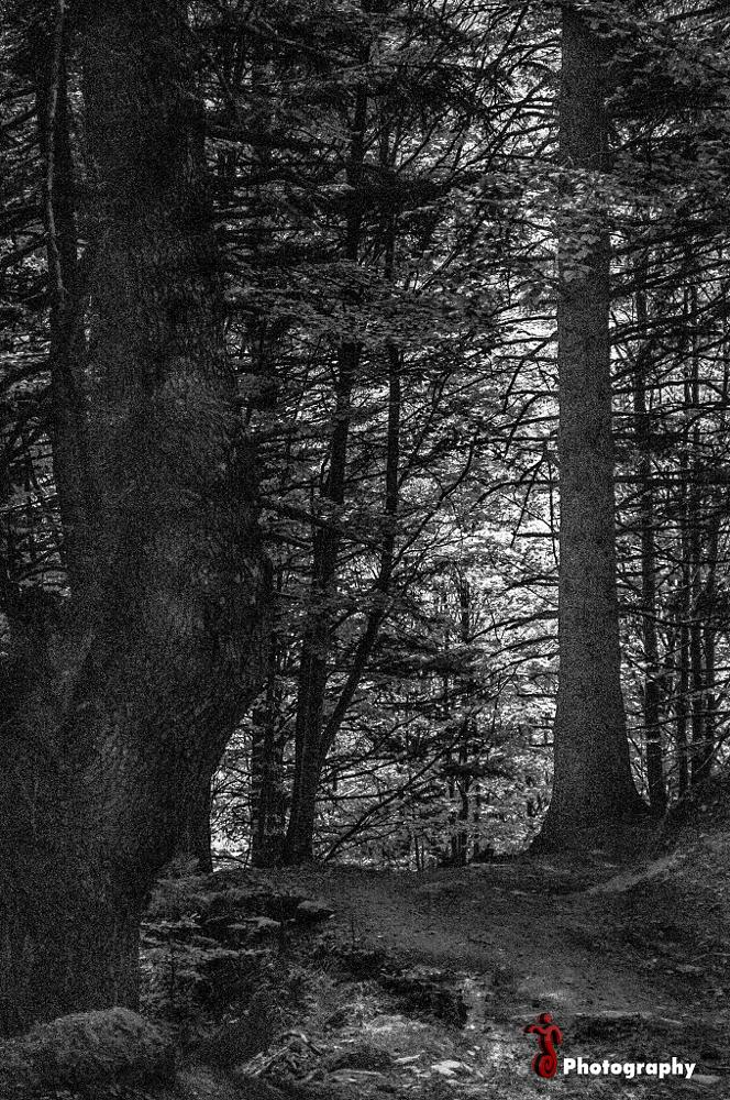 Photo in Black and White #forest #nature #wood #black #white