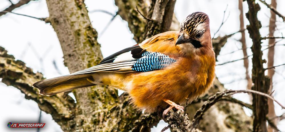 Photo in Nature #bird #yellow #nature #tree