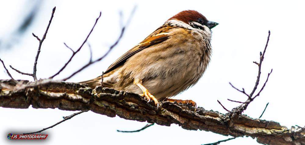 Photo in Nature #nature #bird #tree #sky