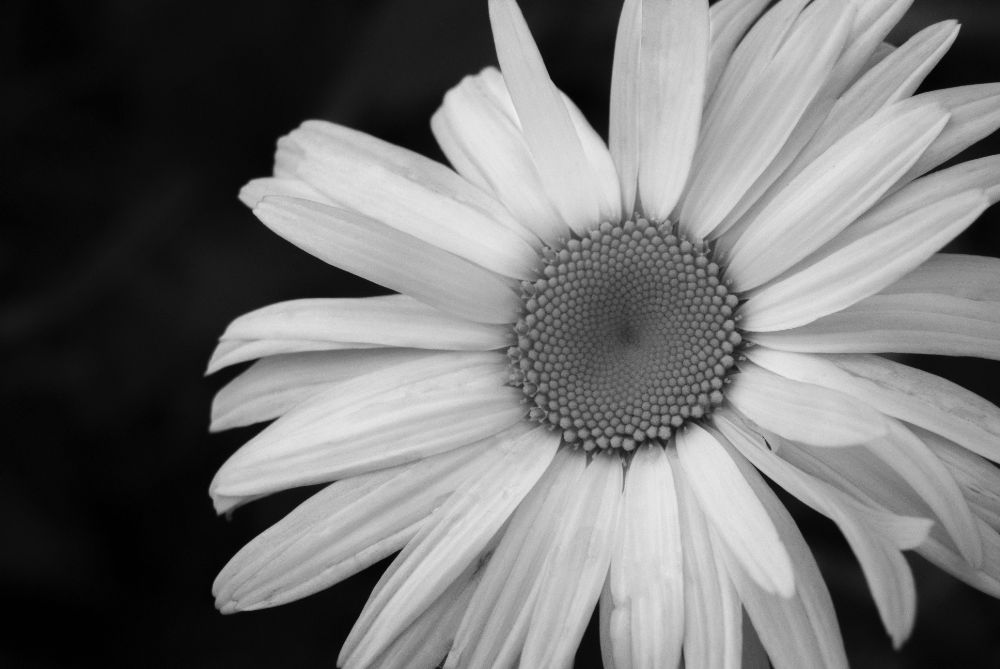 Photo in Nature #flower #black and white #black #white #b/w #nature #macro #photography #still